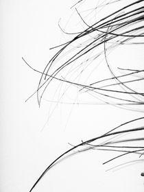 twigs by Katia Terpigoreva