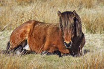 Pferd by AD DESIGN Photo + PhotoArt