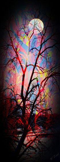 Natur Abstrakt von Walter Zettl