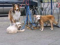 Das bunte Trio vor der Eisdiele by techdog