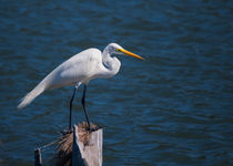 Great Egret At His Post by John Bailey