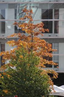 Hamburg, Herbst Hafencity - autumn Harbourcity 4 von Marc Heiligenstein