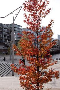 Hamburg, Herbst Hafencity - autumn Harbourcity 3 von Marc Heiligenstein