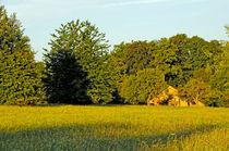 Sommerwiese am Morgen von Michael Ebardt