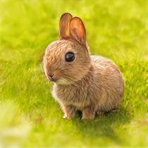 baby bunny von photoplace