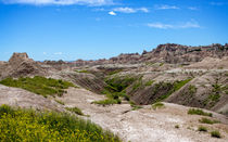 Flowers In The Badlands by John Bailey