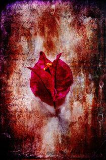 Solitude von Randi Grace Nilsberg