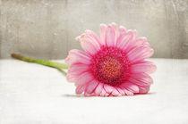 Softness in Pink von Randi Grace Nilsberg