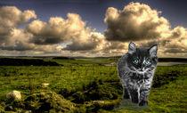 Beast of Bodmin Moor  von Rob Hawkins