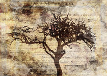 Trees-sing-of-time-4