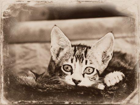 Cute-kitten-1