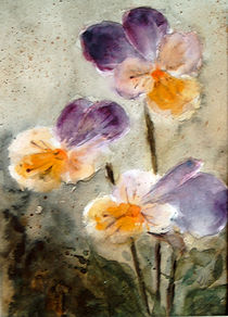'viola tricolor' by Chris Berger