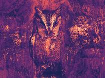 OWL Vlaeroso 49E by David Smith