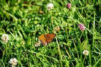 Schmetterlingswiese von Helmut Schneller
