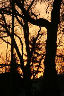 Sunset behind trees by atari-frosch