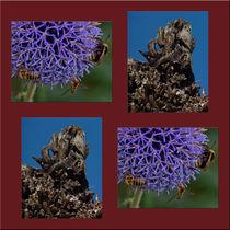 """Viererbild """"Baumknorren und Blütensummen"""" von lisa-glueck"""