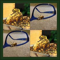 """Viererbild """"Bienen lesen und bilden Gemeinschaften"""" von lisa-glueck"""