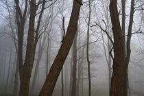 'Nebel' by Britta Wilke