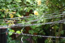 Raindrops on the line von atari-frosch