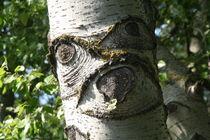 Screaming birch by atari-frosch