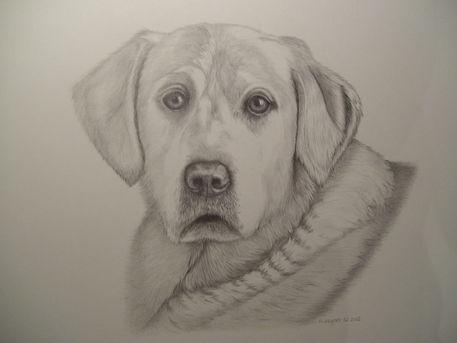 Hund10-12-dot-12