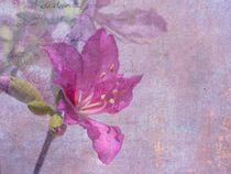 tropische Blüte by Rosina Schneider