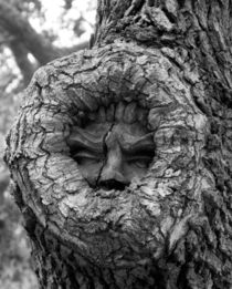 Tree Spirit 1 von O.L.Sanders Photography