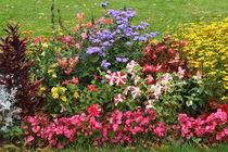 Flowers at Wasserturm Mannheim (2) by atari-frosch