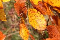 Herbstblätter by Ralf Wolter