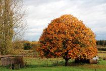 Baum im Herbst von Ralf Wolter