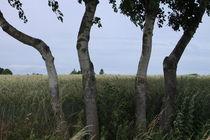 Bäume von Ralf Wolter