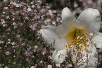 Weiße Blüte im Gras von Ralf Wolter