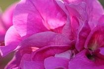 Blüte  von Ralf Wolter
