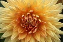 Blume von Ralf Wolter