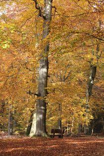 Waldweg mit Ruhepunkt von Ralf Wolter