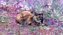 Langhaarige Katze mit einem blauen und einem grünen Auge von Gina Koch