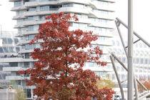 Hamburg, Herbst Hafencity - autumn Harbourcity 6 von Marc Heiligenstein
