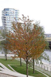 Hamburg, Herbst Hafencity - autumn Harbourcity 5 von Marc Heiligenstein