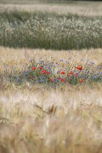 Feld und Blumen im Sommer by Ralf Wolter