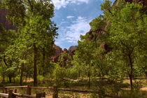 A Verdant Valley In Zion Canyon by John Bailey