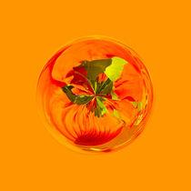 Orange in the globe by Robert Gipson