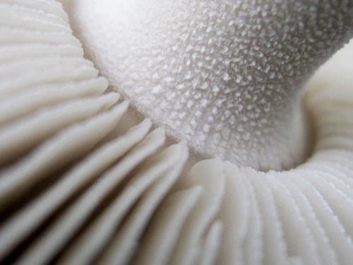 Mushroom-under-00