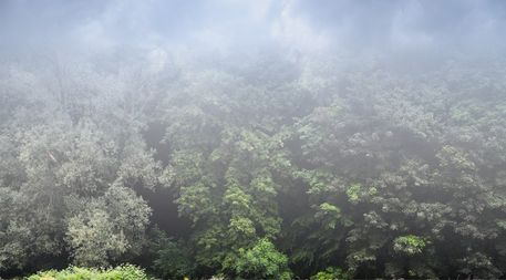 Forest-clouds-layer2