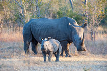 Rhino mother with baby by Wolfgang Kaehler