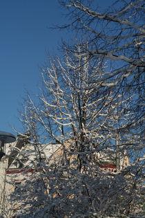 Snow on branches (4) von atari-frosch
