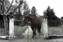 Horse by Christine Sponchia
