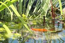 Goldfisch von Ralf Wolter