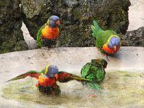 Papagei von Ralf Wolter