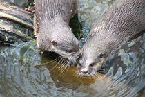 Otter von Ralf Wolter
