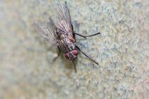 Fliege by Ralf Wolter